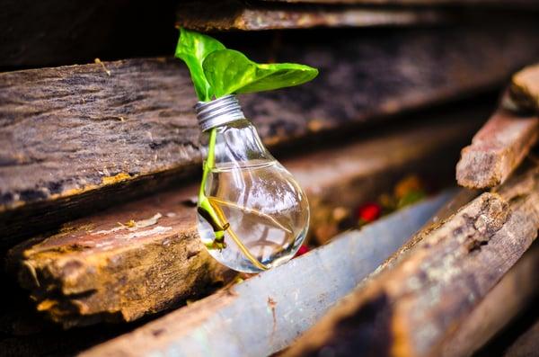 bruno-scramgnon-bulb-idea-315658 (1)